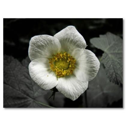 Αφίσα (λουλούδι, ομορφιά)